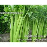 CAS 520-36-5芹菜素.芹菜籽提取物