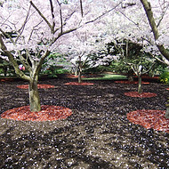 ANCONA 有机覆盖物 源于美国的生态景观覆盖物